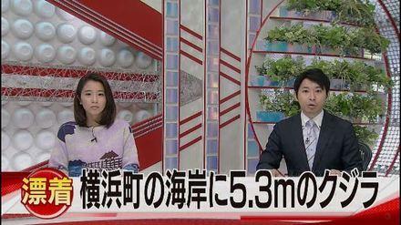 1-横浜町の海岸にクジラが打ちあがる(青森朝日放送).wmv_000004397.jpg