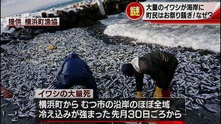 1-横浜町イワシのニュース(ABA)wmv.wmv_000079103.jpg