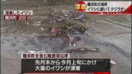 1-横浜町の海岸にクジラが打ちあがる(青森朝日放送).wmv_000049000.jpg