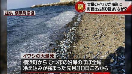 1-横浜町イワシのニュース(ABA)wmv.wmv_000075043.jpg